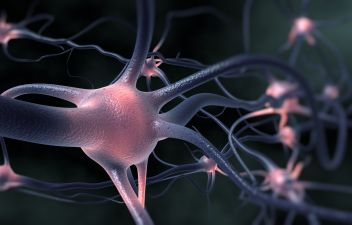 photodune-9853330-neurons-m.jpg